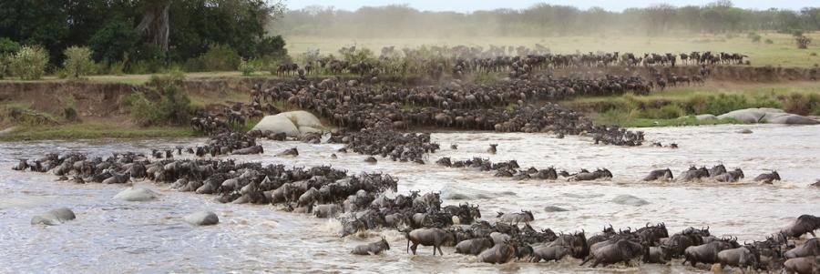 Masaai Mara crossing